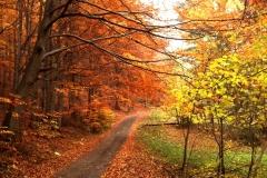Podzim na Vyškovci